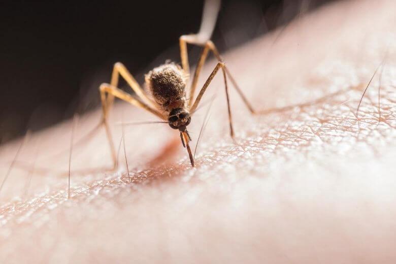 укусов комаров