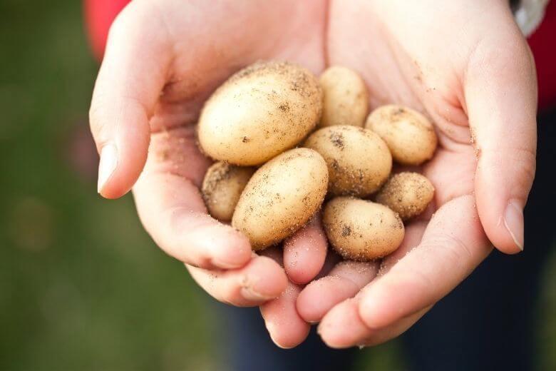 картошкой