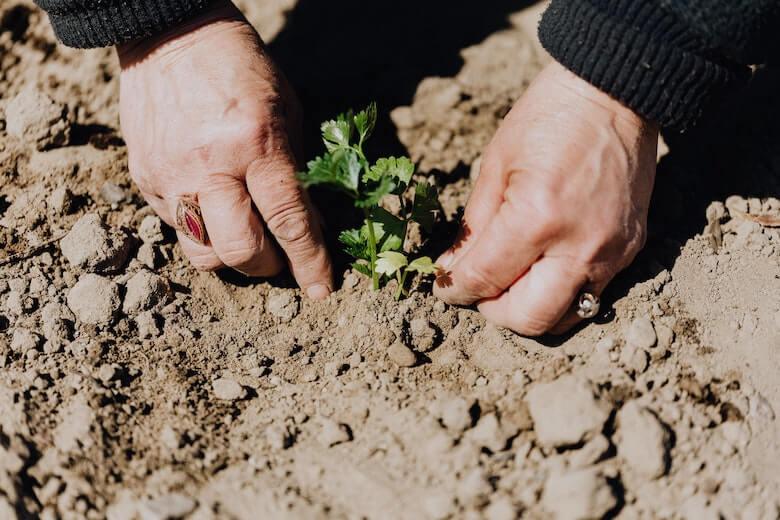 садоводческие уловки